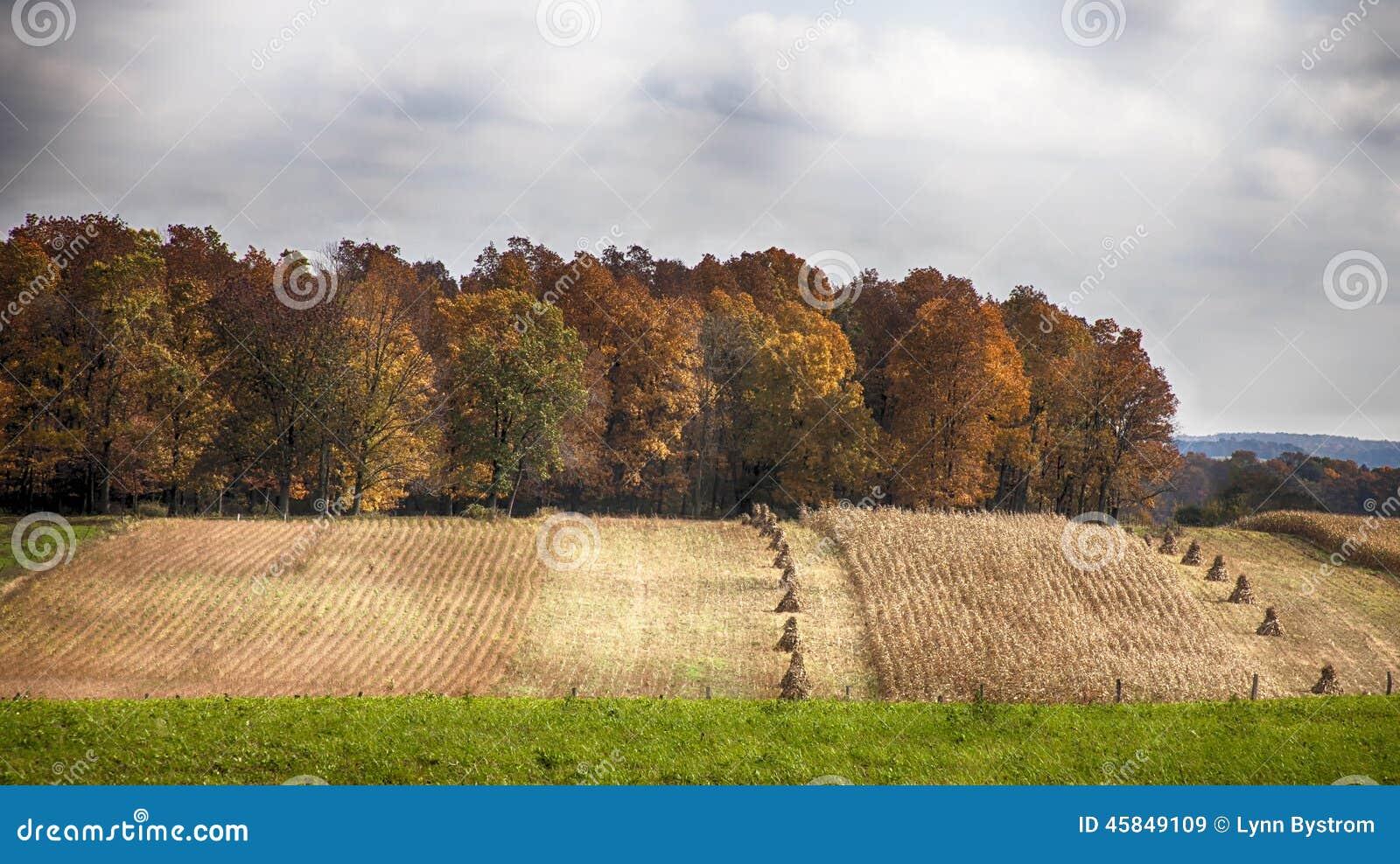 Paisagem da colheita da queda