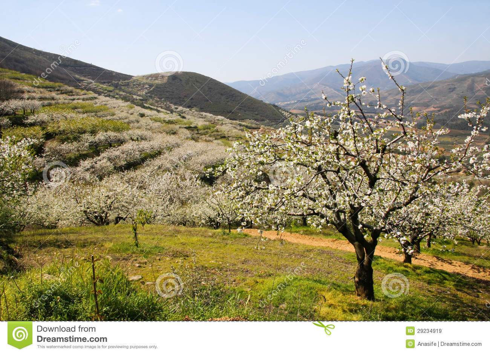 Download Paisagem Da Flor De Cerejeira Entre Montanhas Imagem de Stock - Imagem de florescer, nave: 29234919