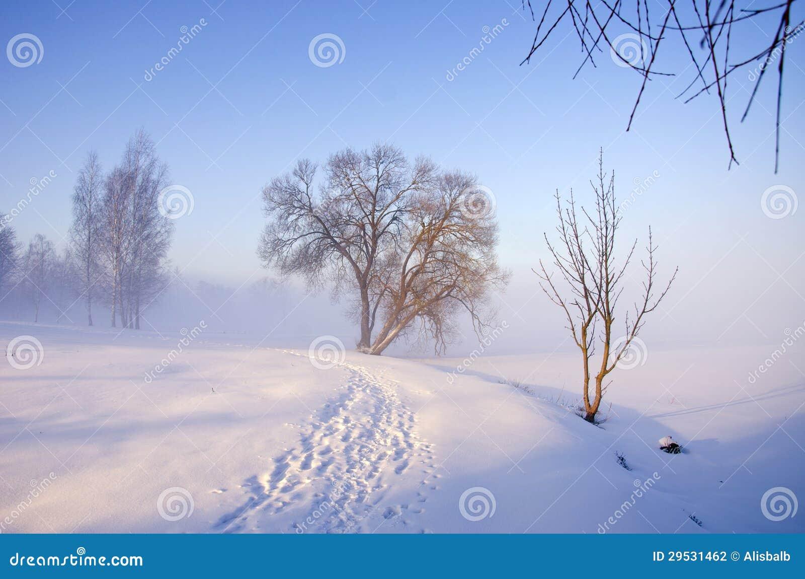 Paisagem da manhã do inverno com névoa