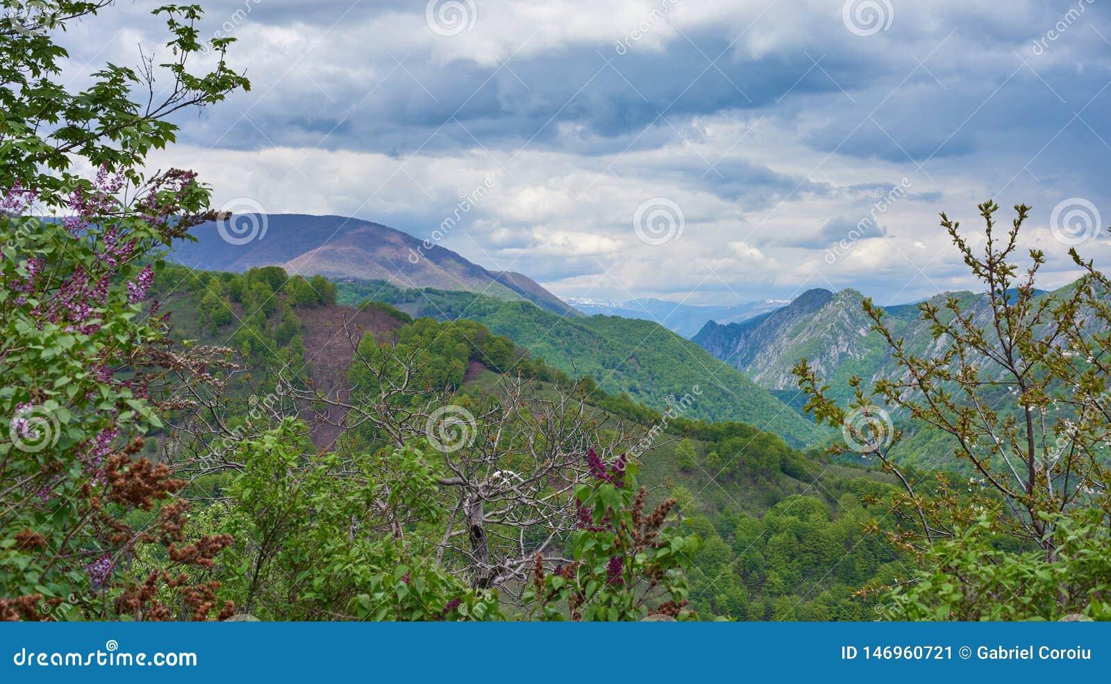 Paisagem da montanha com as flores lilás no primeiro plano