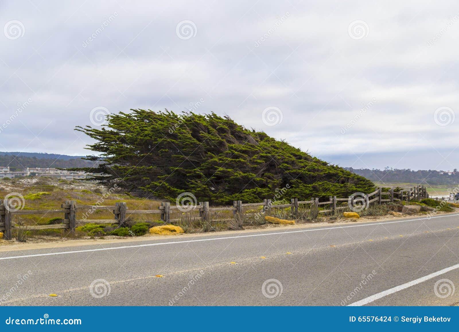 Paisagem da movimentação de 17 milhas na Costa do Pacífico, Monterey, Califórnia
