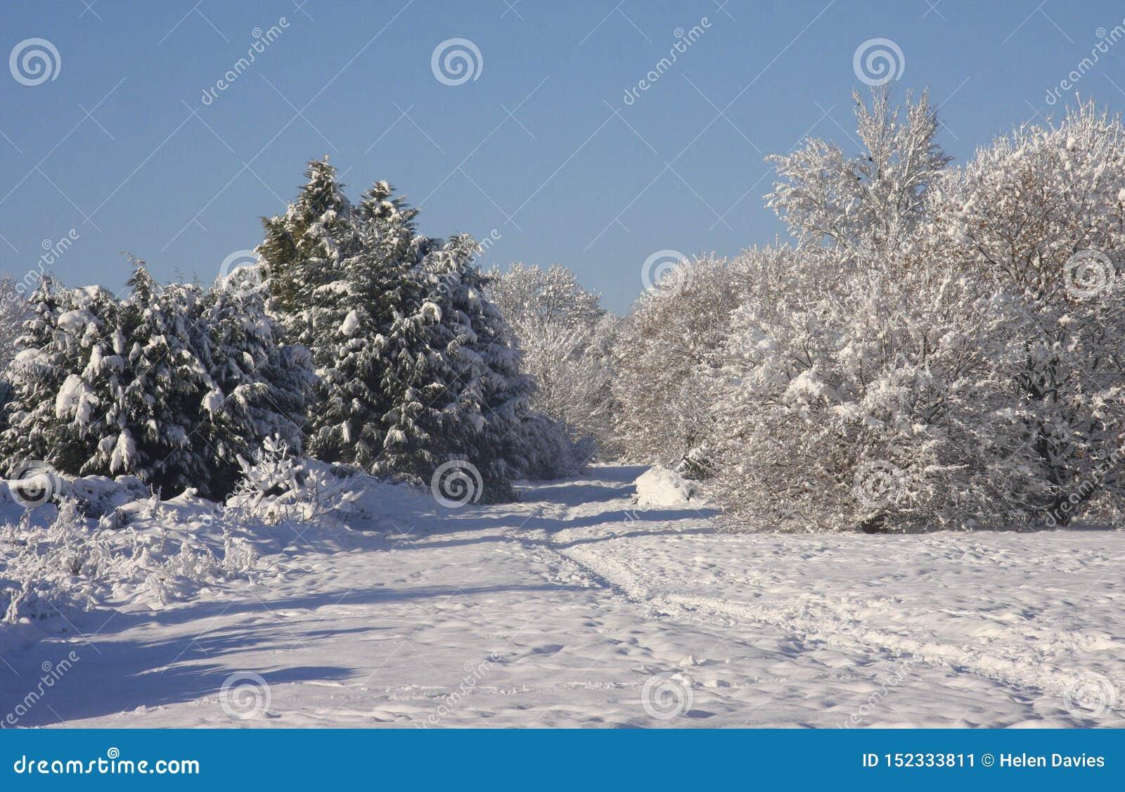 Paisagem da neve do inverno, Cardiff, Reino Unido