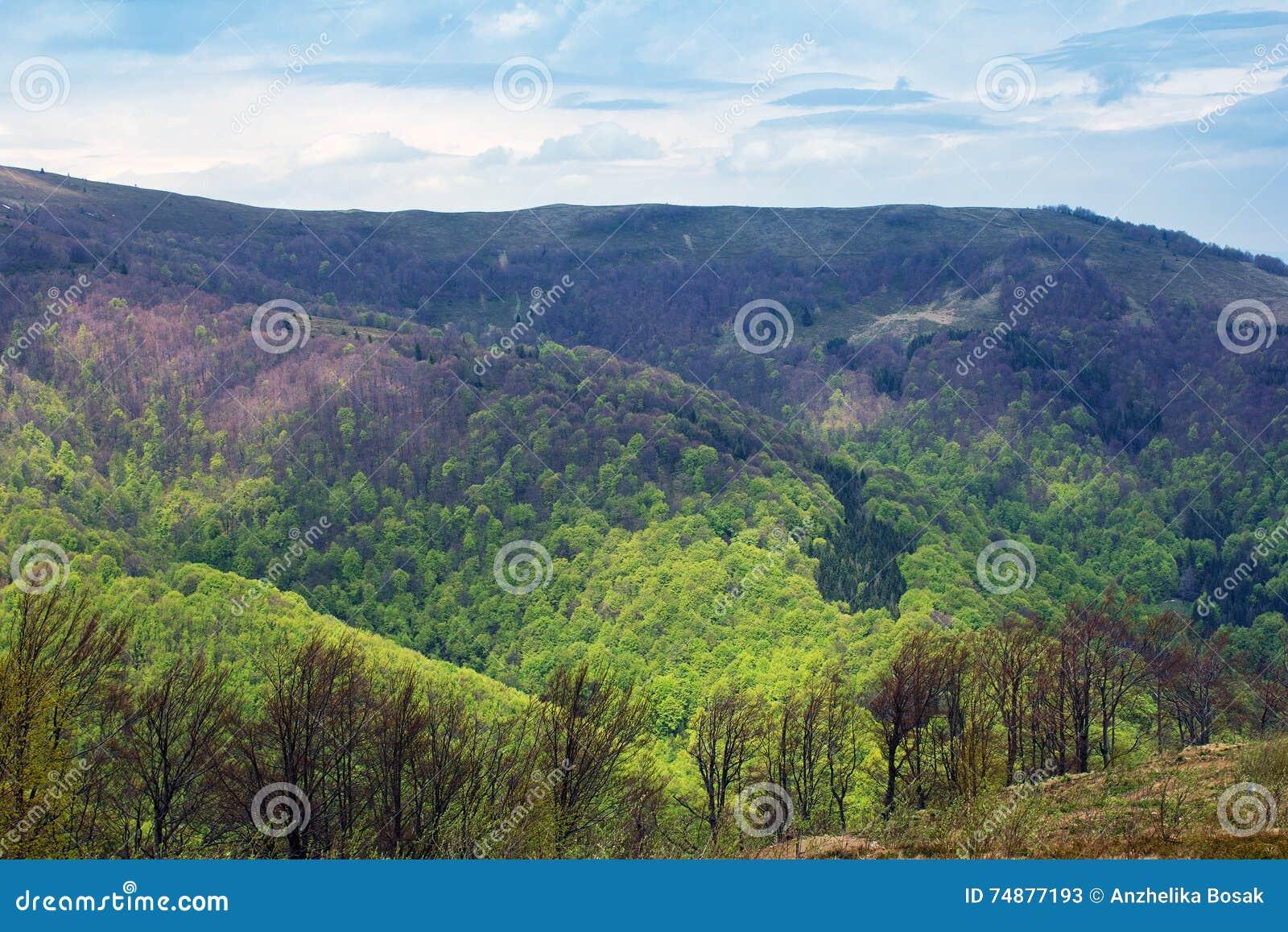 Paisagem das montanhas com árvores verdes