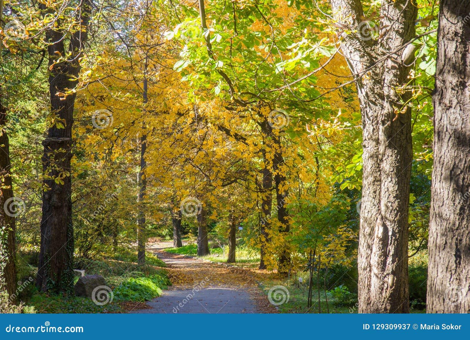 Paisagem de Autumn October árvores desiduous coloridas - opinião ensolarada do outono Jardim botânico da universidade acadêmico d