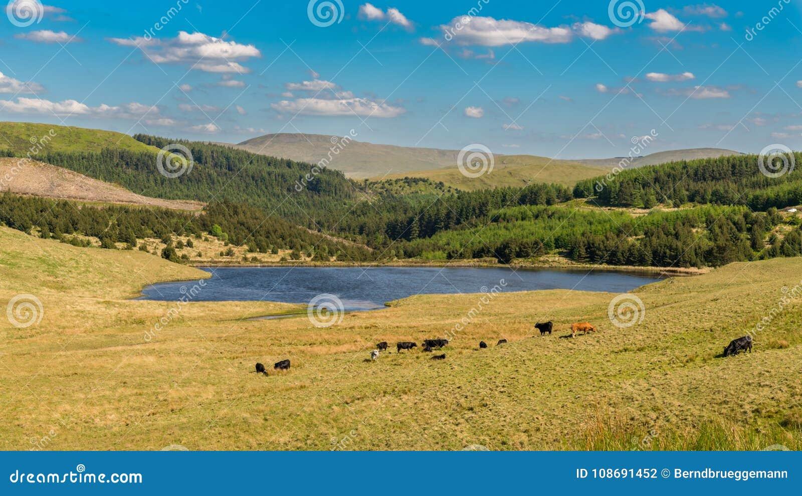 Paisagem de Galês perto de Tal-y-bont, Reino Unido