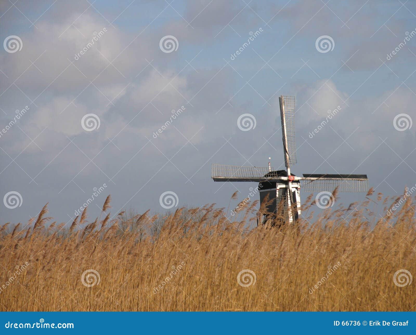 Paisagem de lingüeta holandesa 2