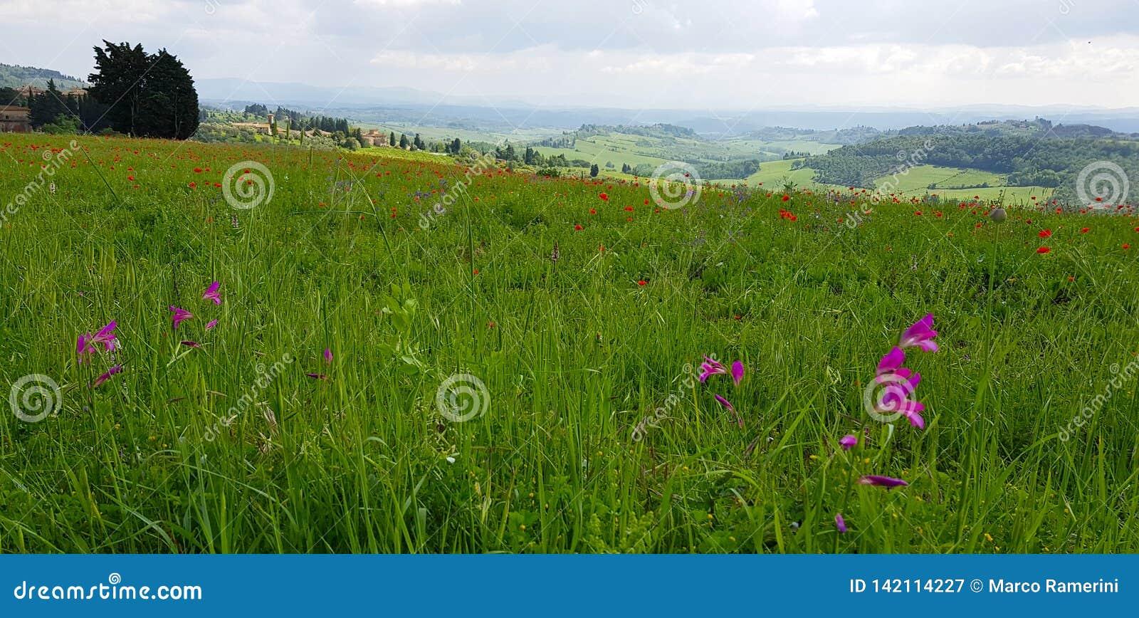 A paisagem do Chianti nos montes Tuscan