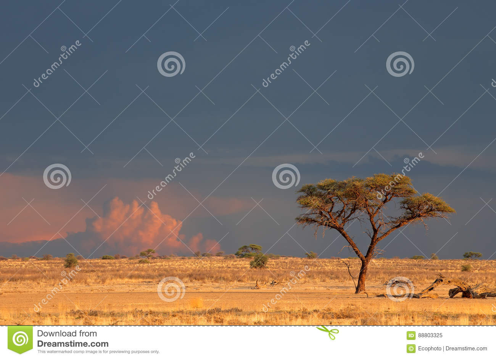 Paisagem do deserto de Kalahari