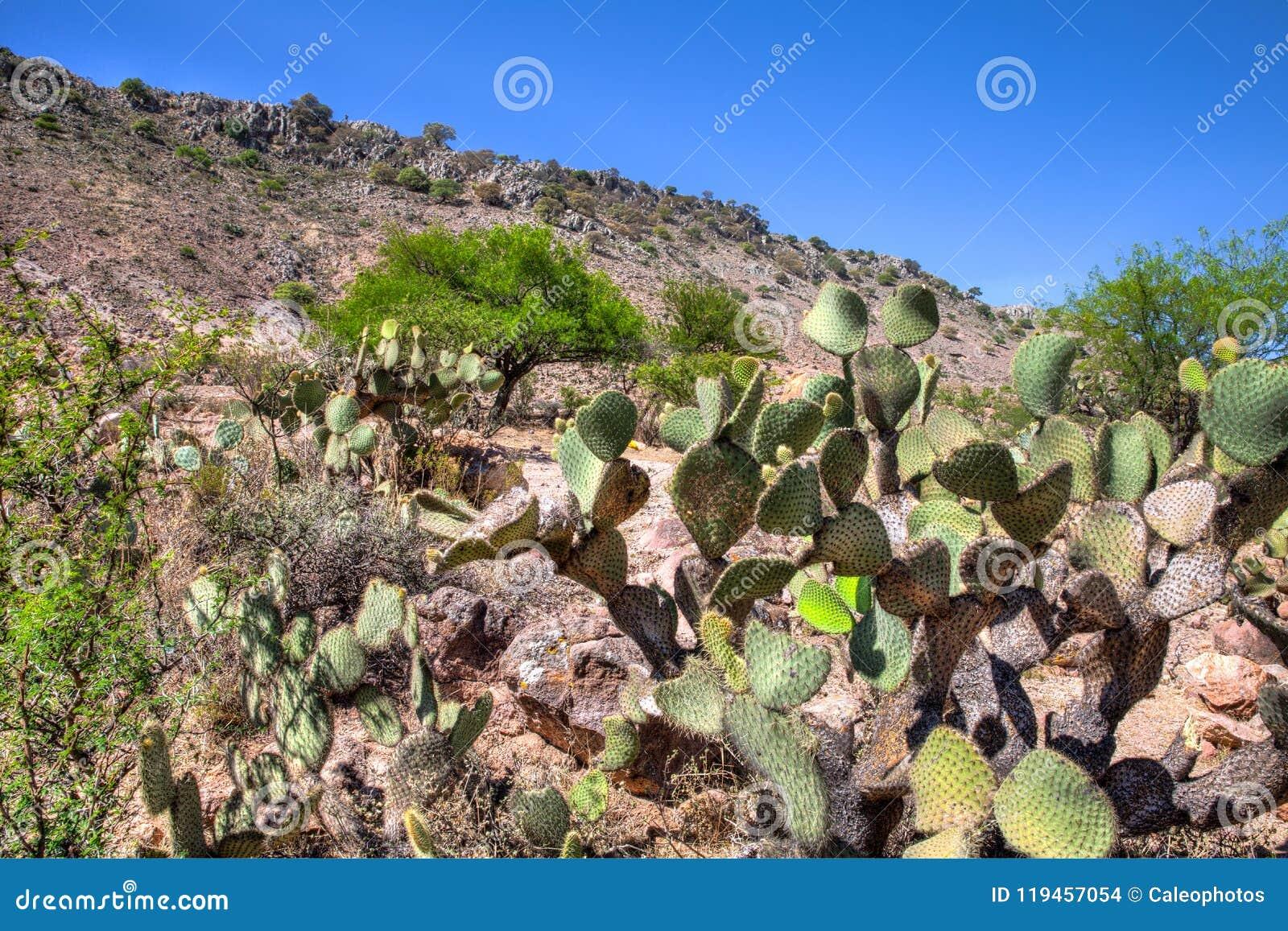Paisagem do deserto mexicano