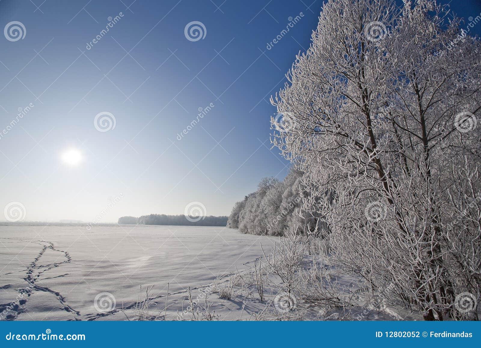Paisagem do inverno com árvores geadas e rime