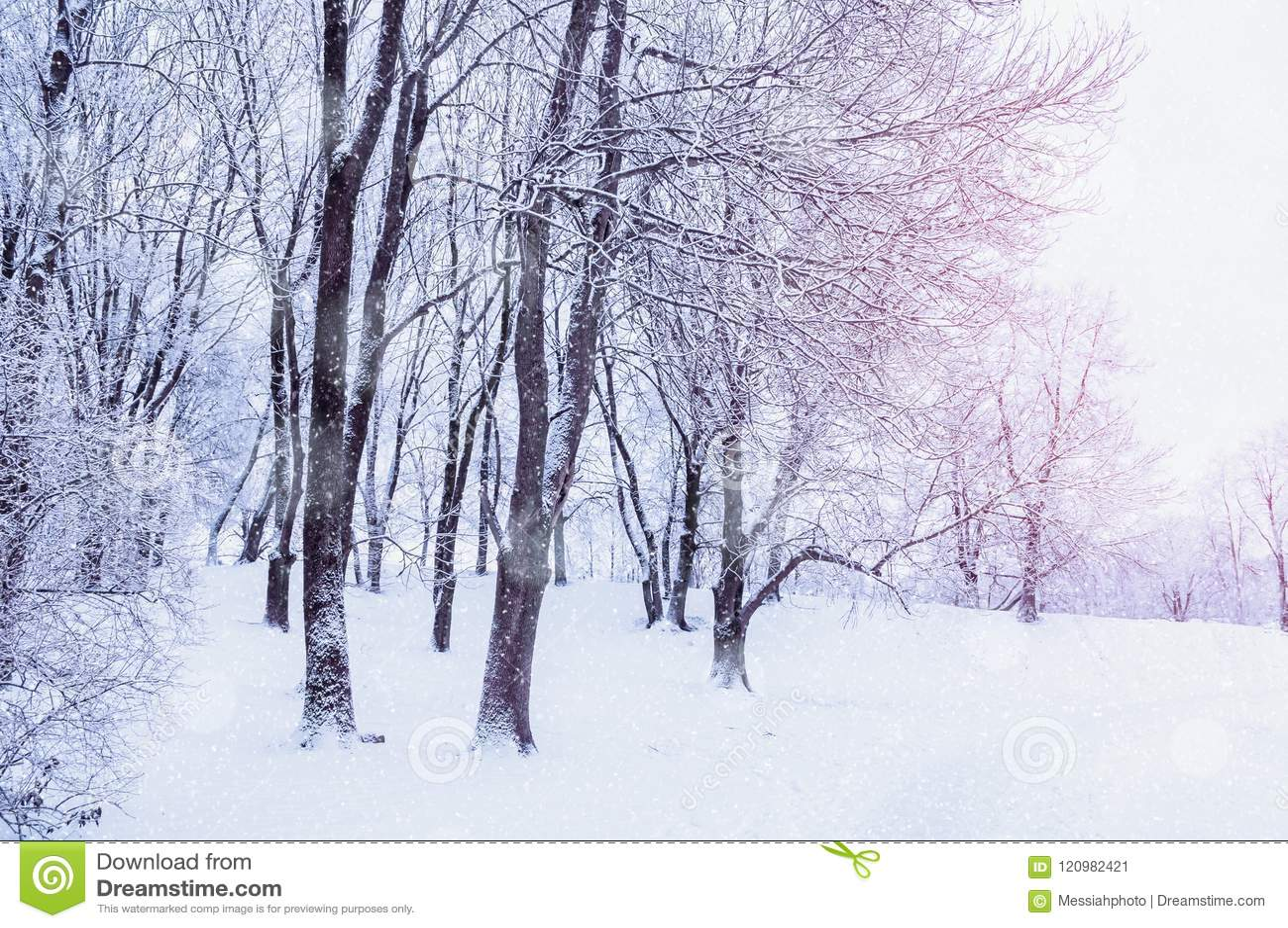 Paisagem do inverno com neve de queda - floresta do país das maravilhas com queda de neve no bosque do inverno CMYK básico