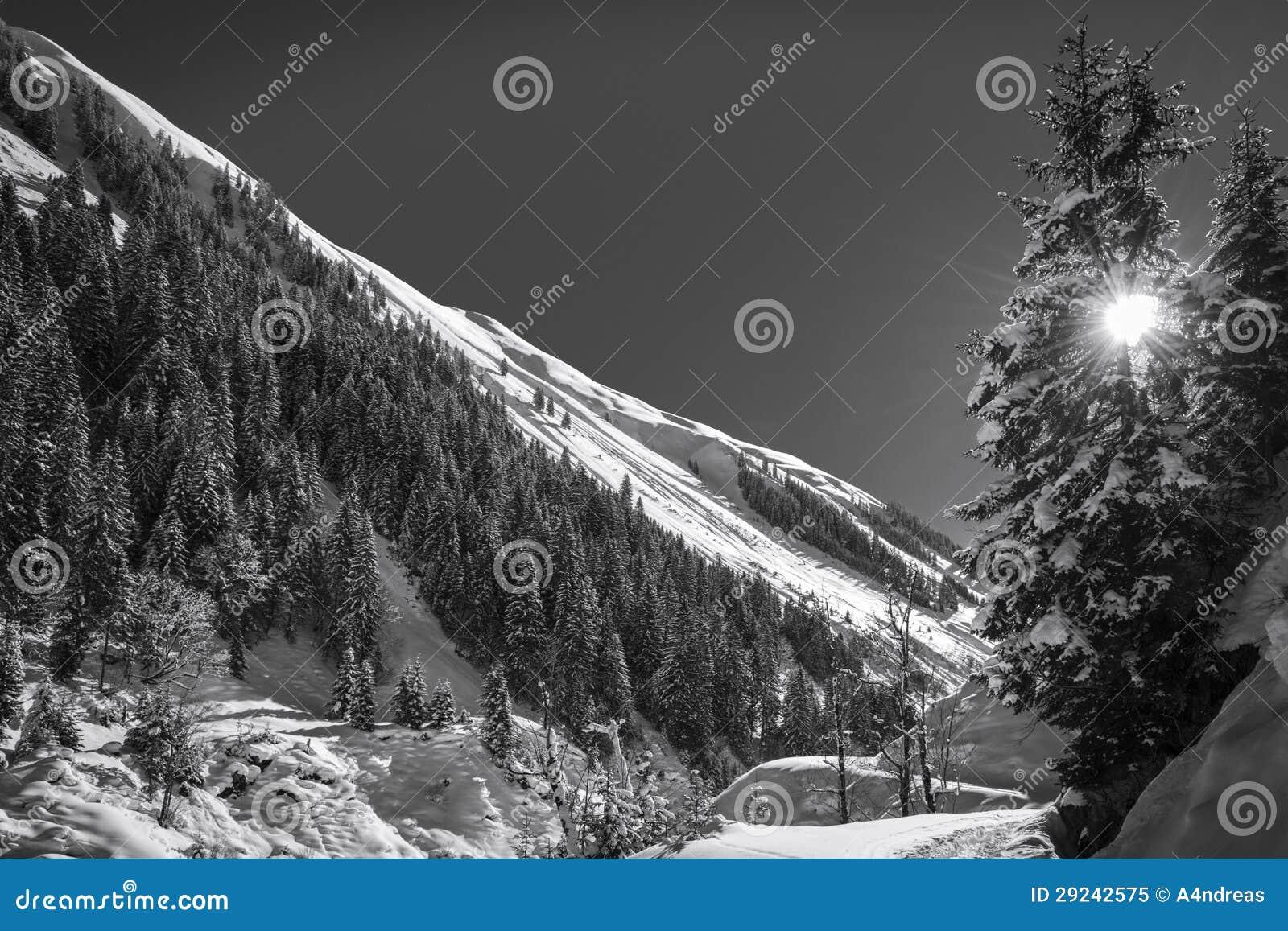 Download Paisagem Do Inverno Com O Sol Que Brilha Imagem de Stock - Imagem de fresco, geada: 29242575