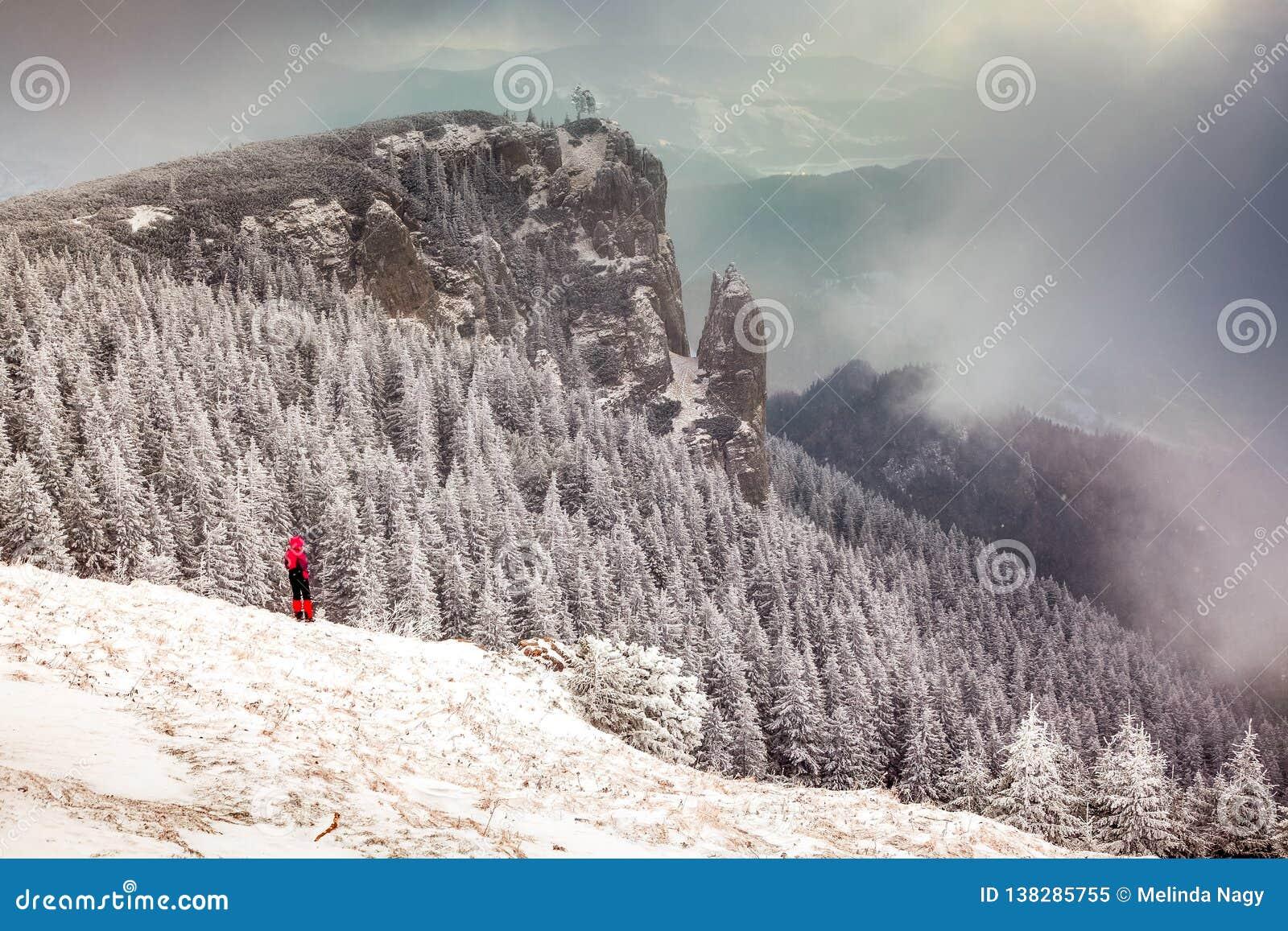 Paisagem do inverno com os abeto nevados nas montanhas