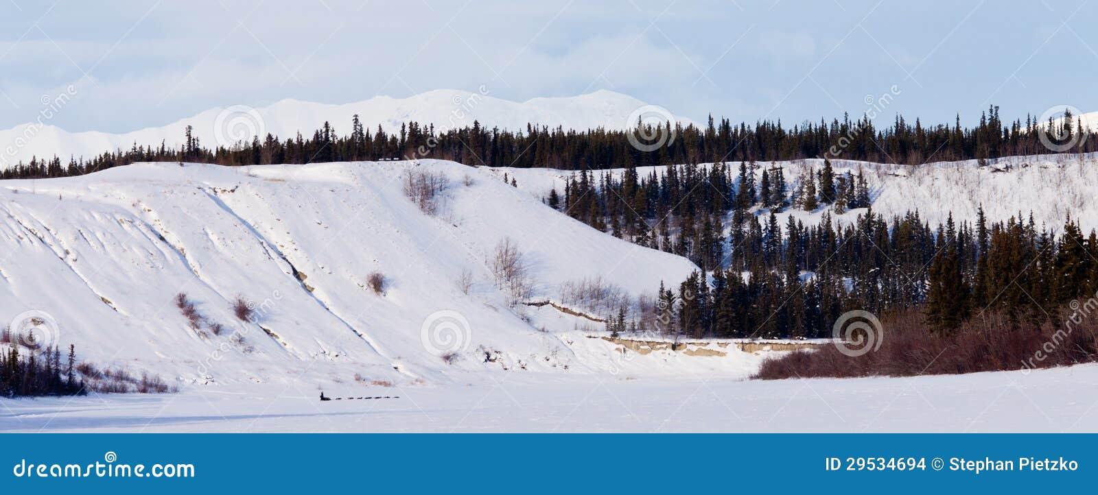 Paisagem do inverno de Yukon e trenó do musher da tração dos cães