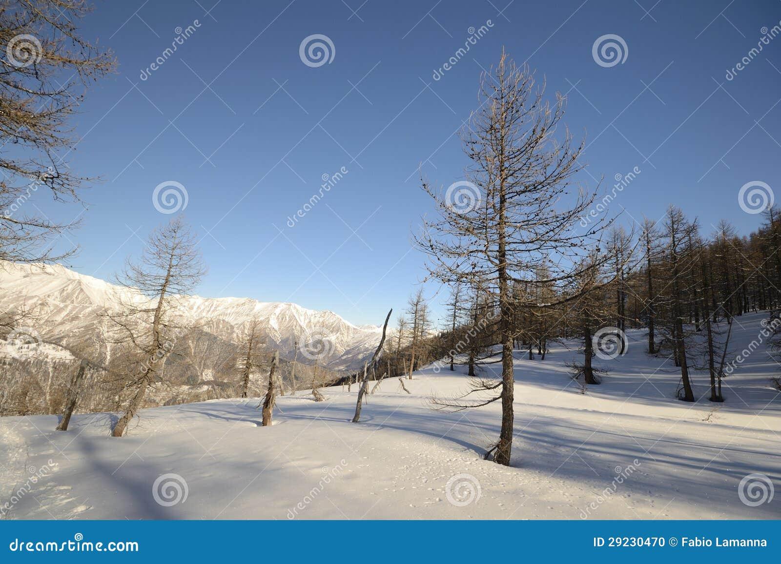 Download Paisagem Do Inverno Nos Cumes Foto de Stock - Imagem de montanha, ângulo: 29230470