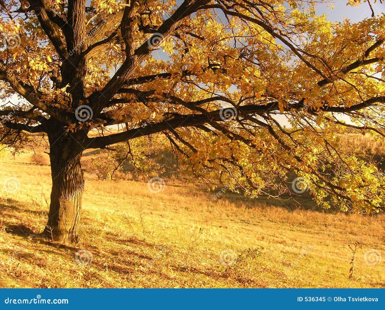 Paisagem do outono com árvore 2