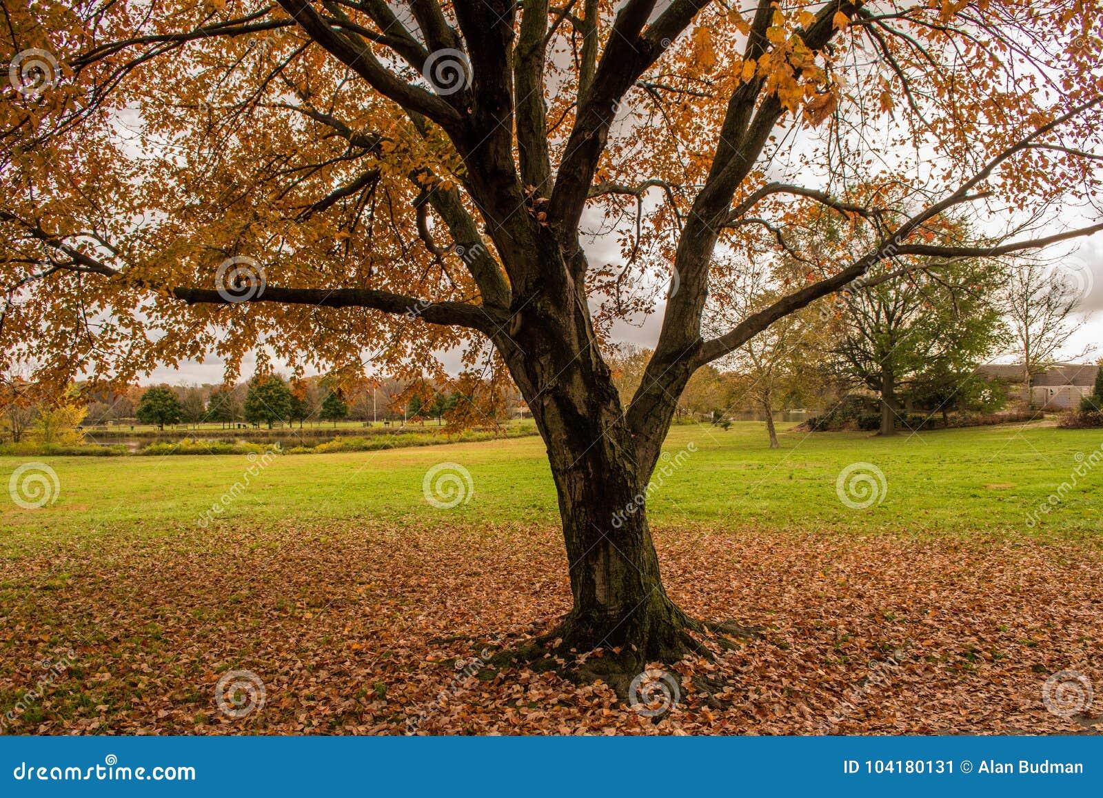 Paisagem Do Outono Com Folhas Coloridas Na Terra, Na árvore E Em Um on