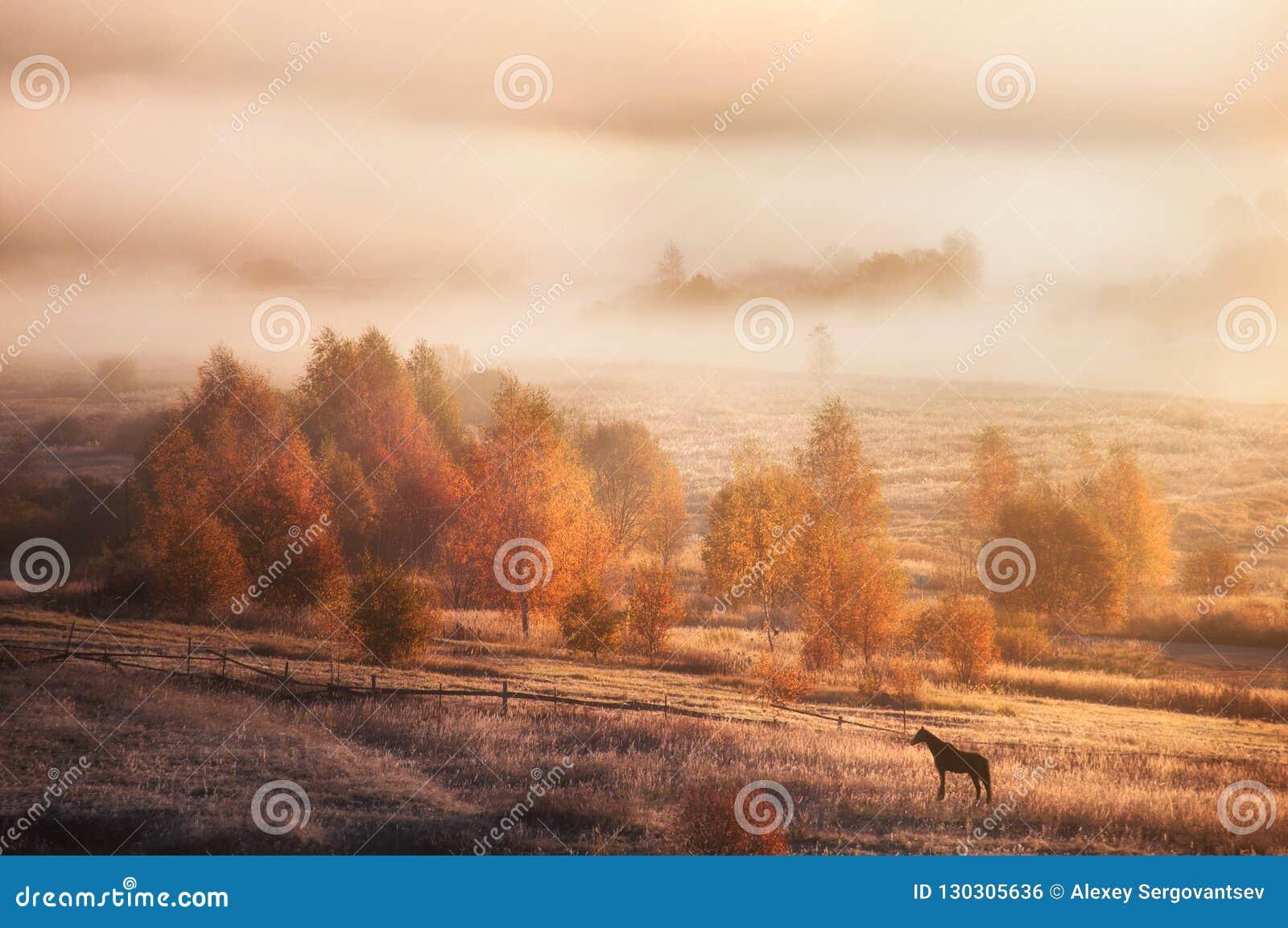 Paisagem do outono em Rússia Natureza da manhã