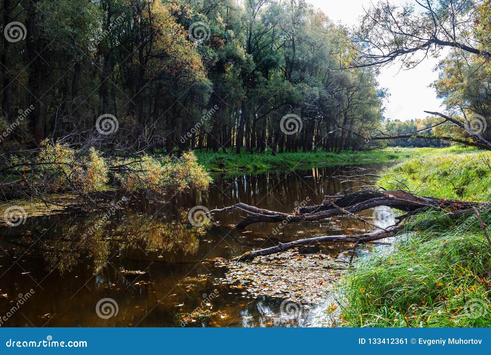 Paisagem do outono no rio Registro de Sibéria ocidental, Novosibirsk