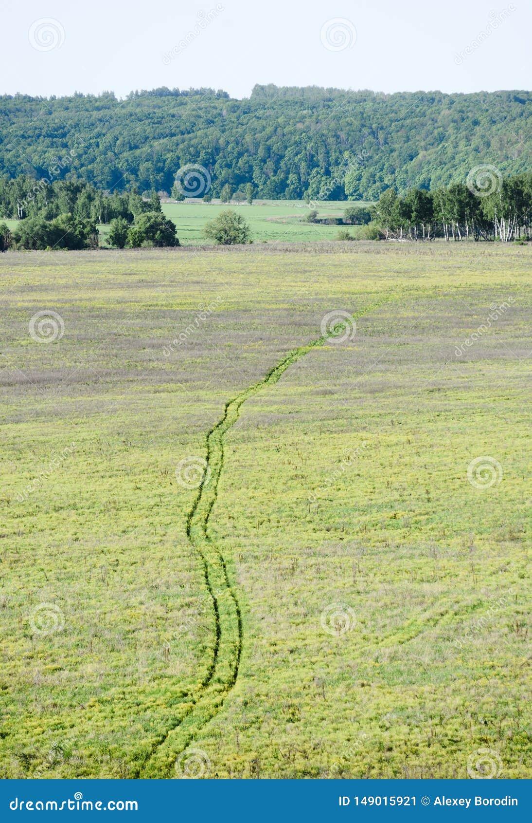 Paisagem do pa?s Trilha da roda na grama verde com a floresta verde no fundo