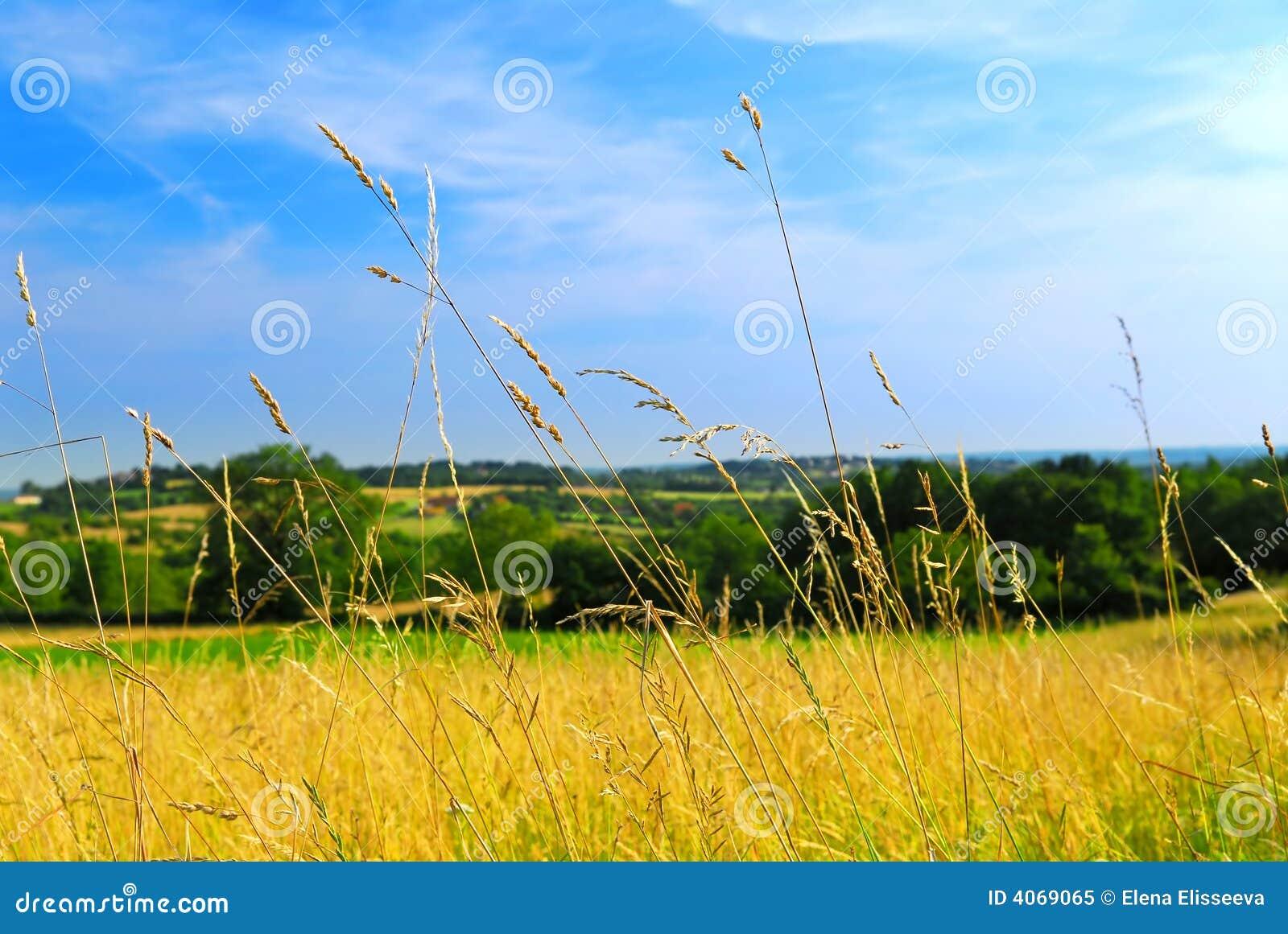 Paisagem do prado do país