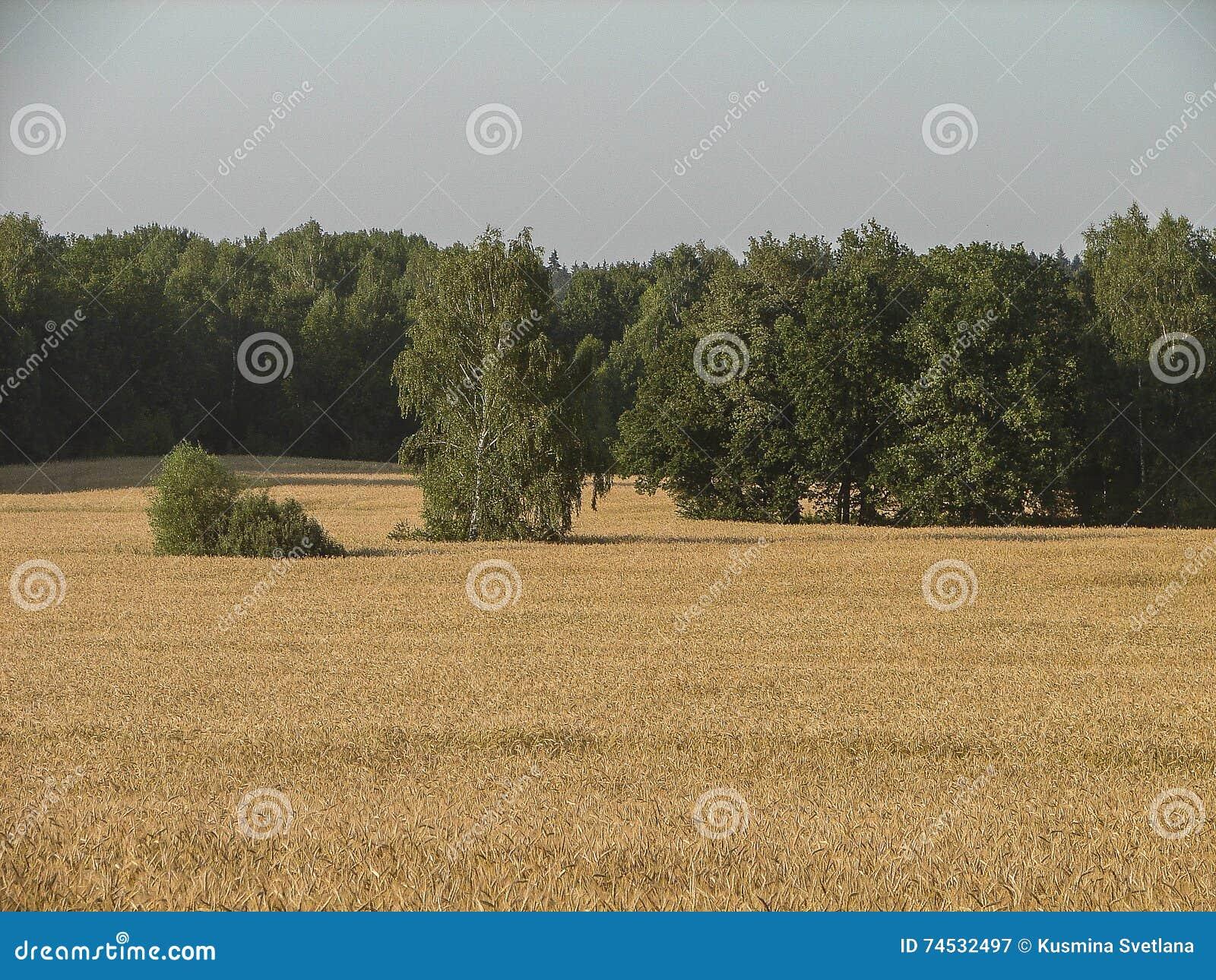 Paisagem do russo na região de Kaluga
