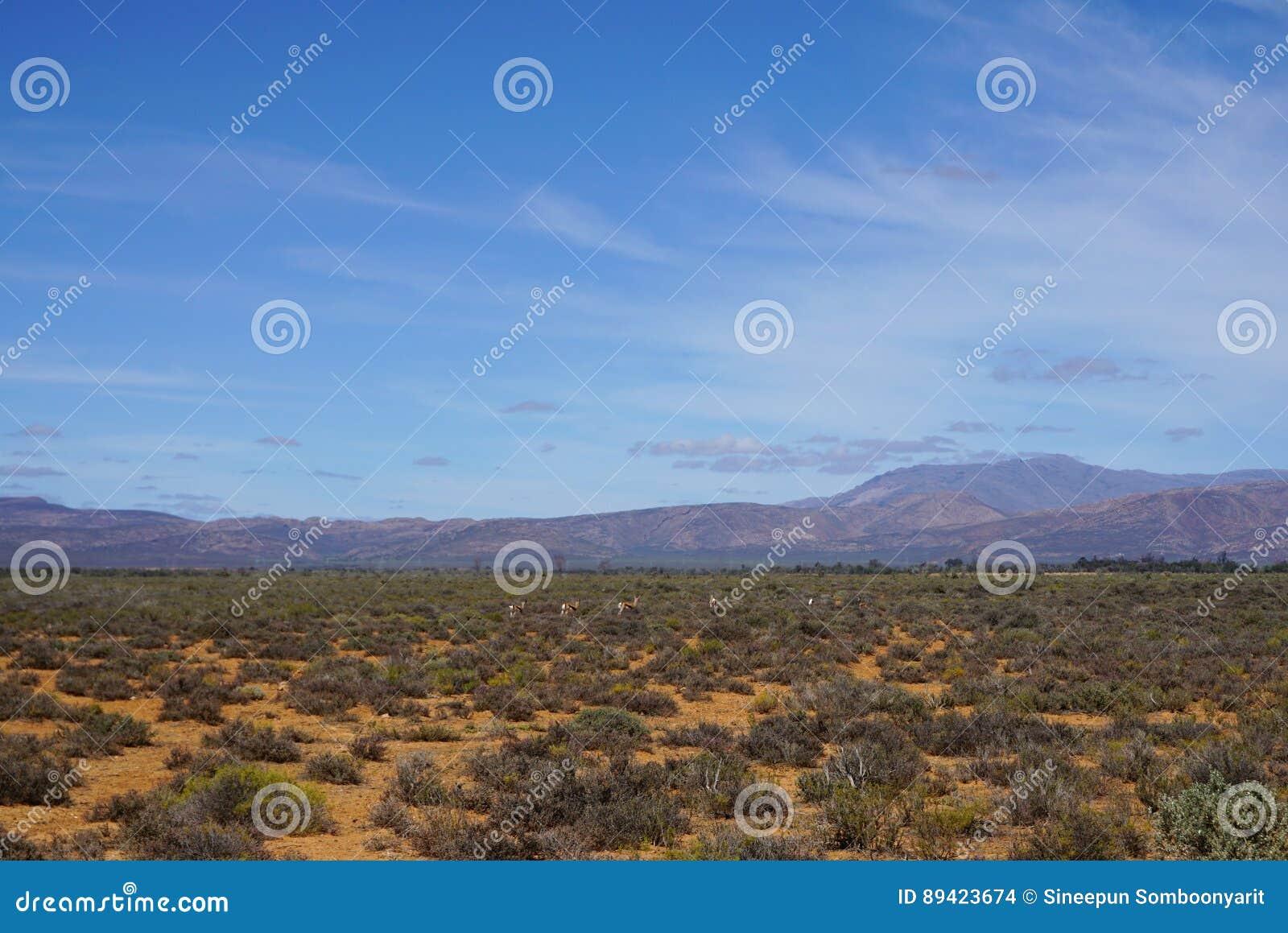 Paisagem do safari de África com o backgrou do rio, do prado e da montanha