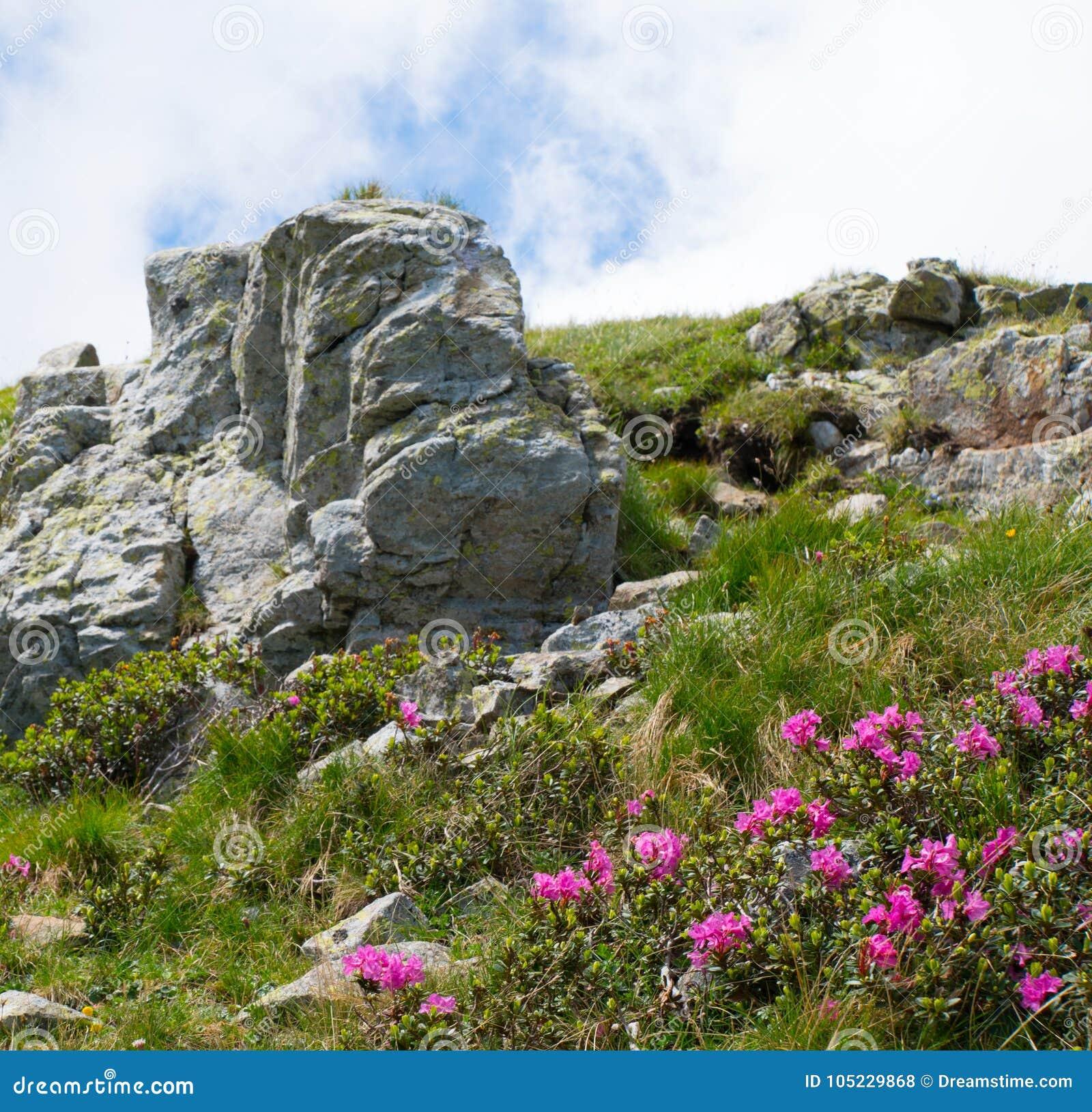 Paisagem do verão com rochas e as flores selvagens bonitas na névoa da manhã
