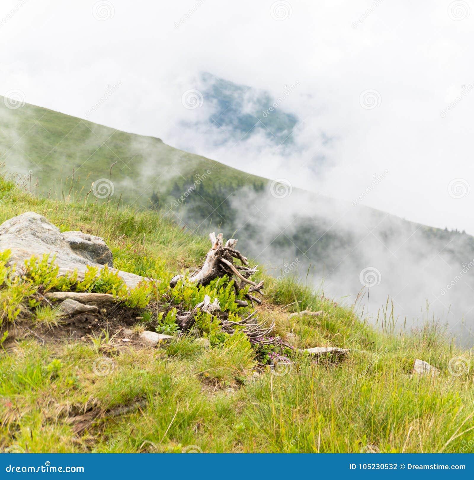 Paisagem do verão com rochas e uma árvore caída na névoa da manhã