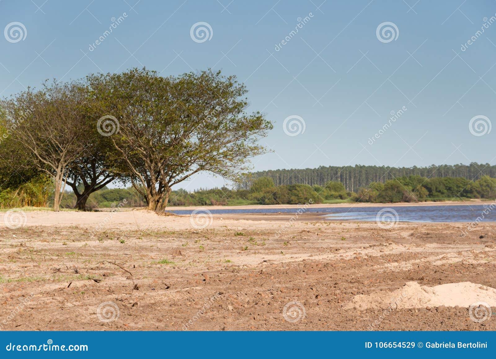 Paisagem Do Verão Nos Bancos Da Areia Da água Do Rio E Do