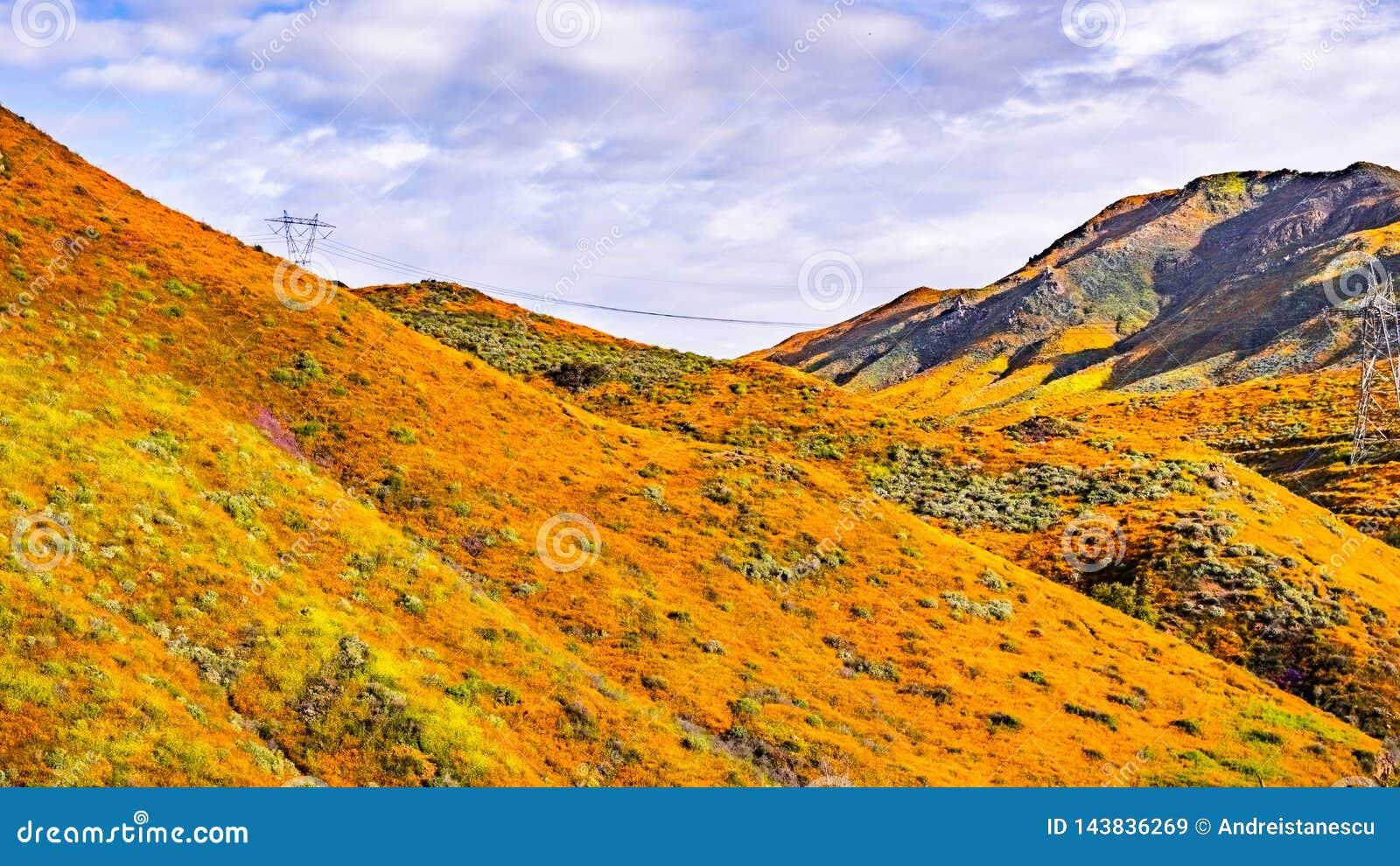 Paisagem em Walker Canyon durante o superbloom, papoilas de Califórnia que cobrem os vales da montanha e os cumes, lago Elsinore,