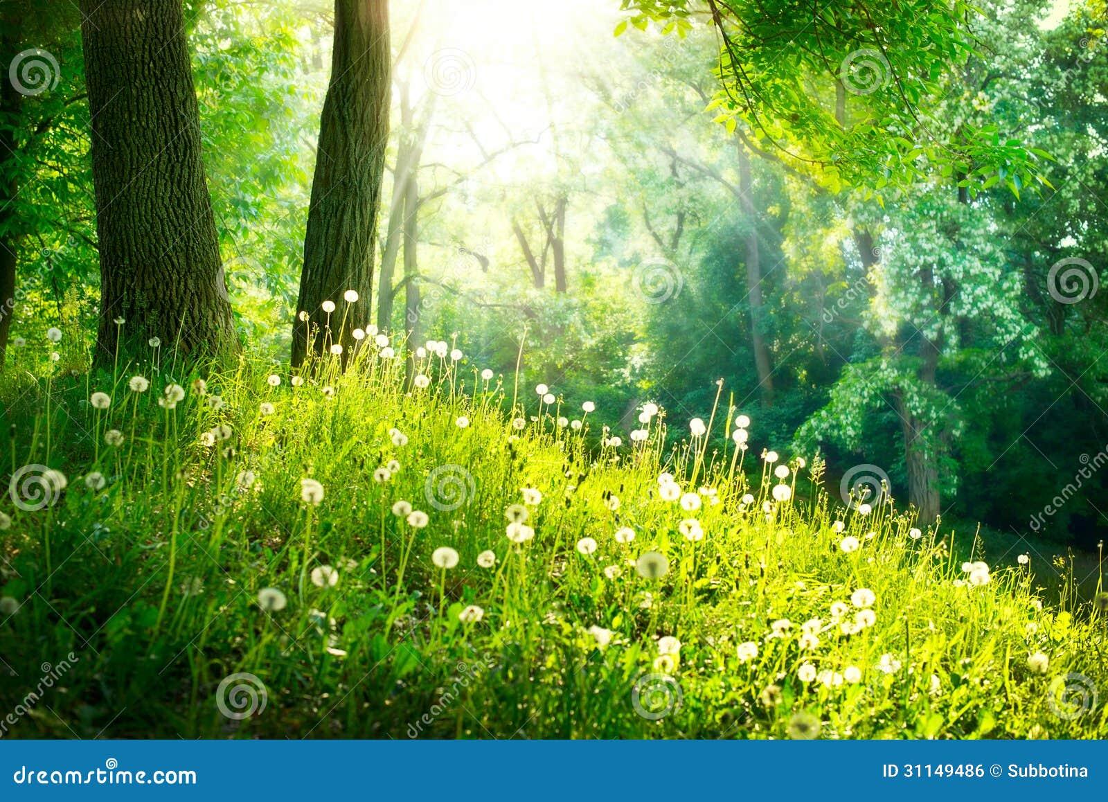 Paisagem. Grama verde e árvores
