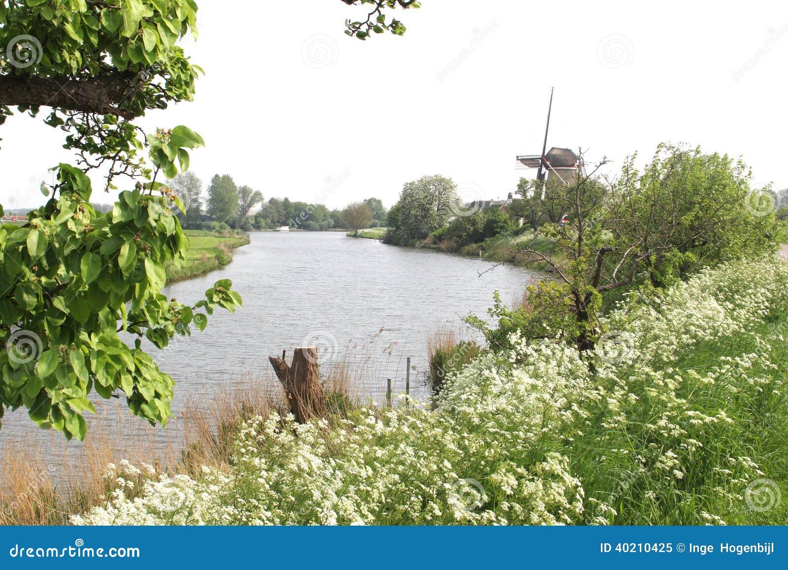 Paisagem holandesa com moinho de vento do milho & rio de Linge