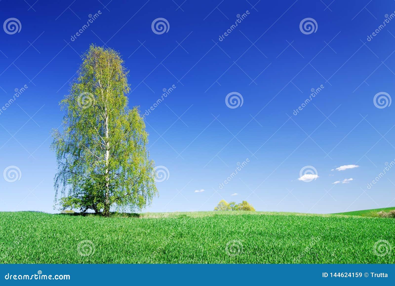 Paisagem idílico, árvore só entre campos verdes