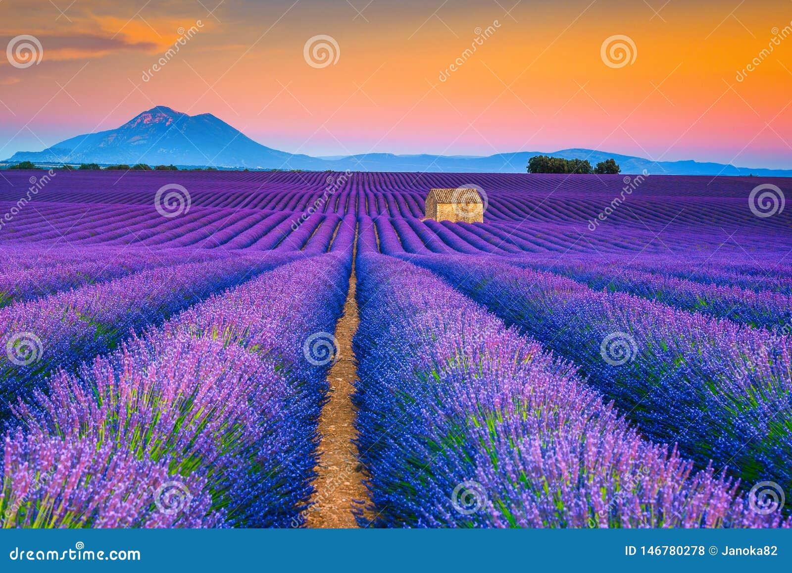 Paisagem maravilhosa do verão com campos da alfazema em Provence, Valensole, França