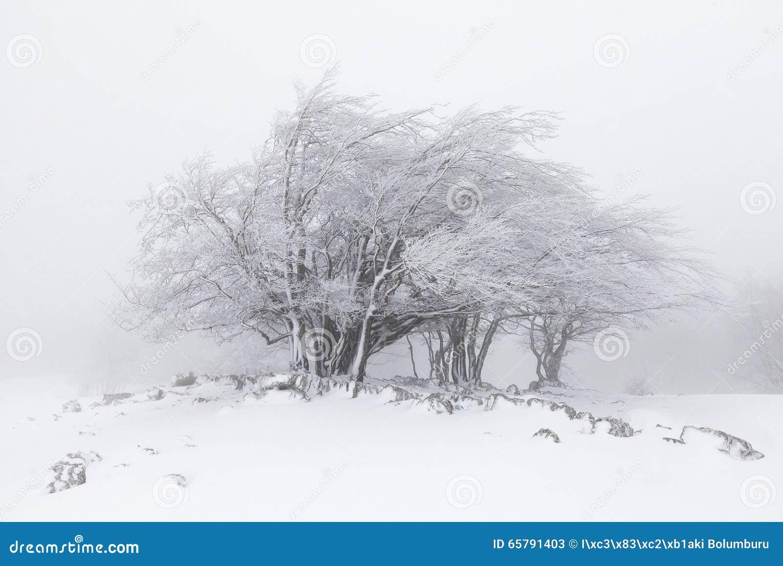 Paisagem nevoenta do inverno na floresta