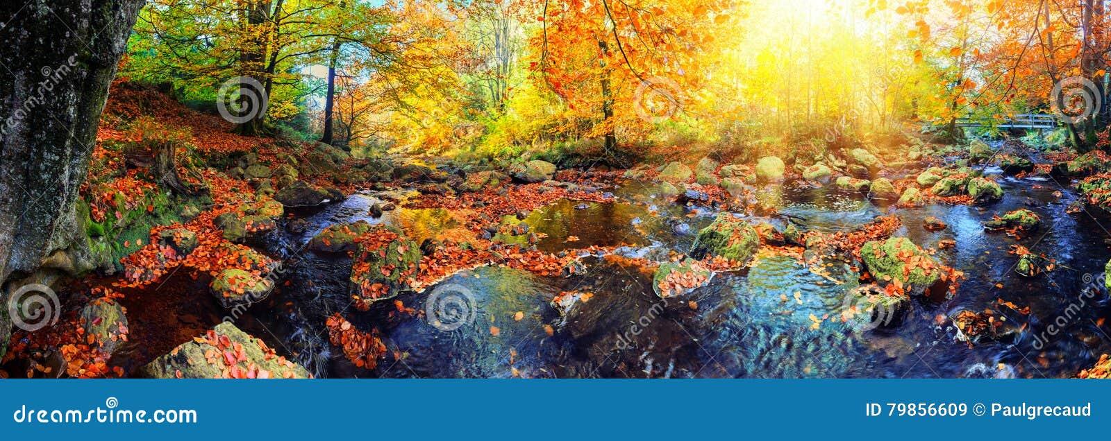 Paisagem panorâmico do outono com córrego da floresta Backg da natureza da queda