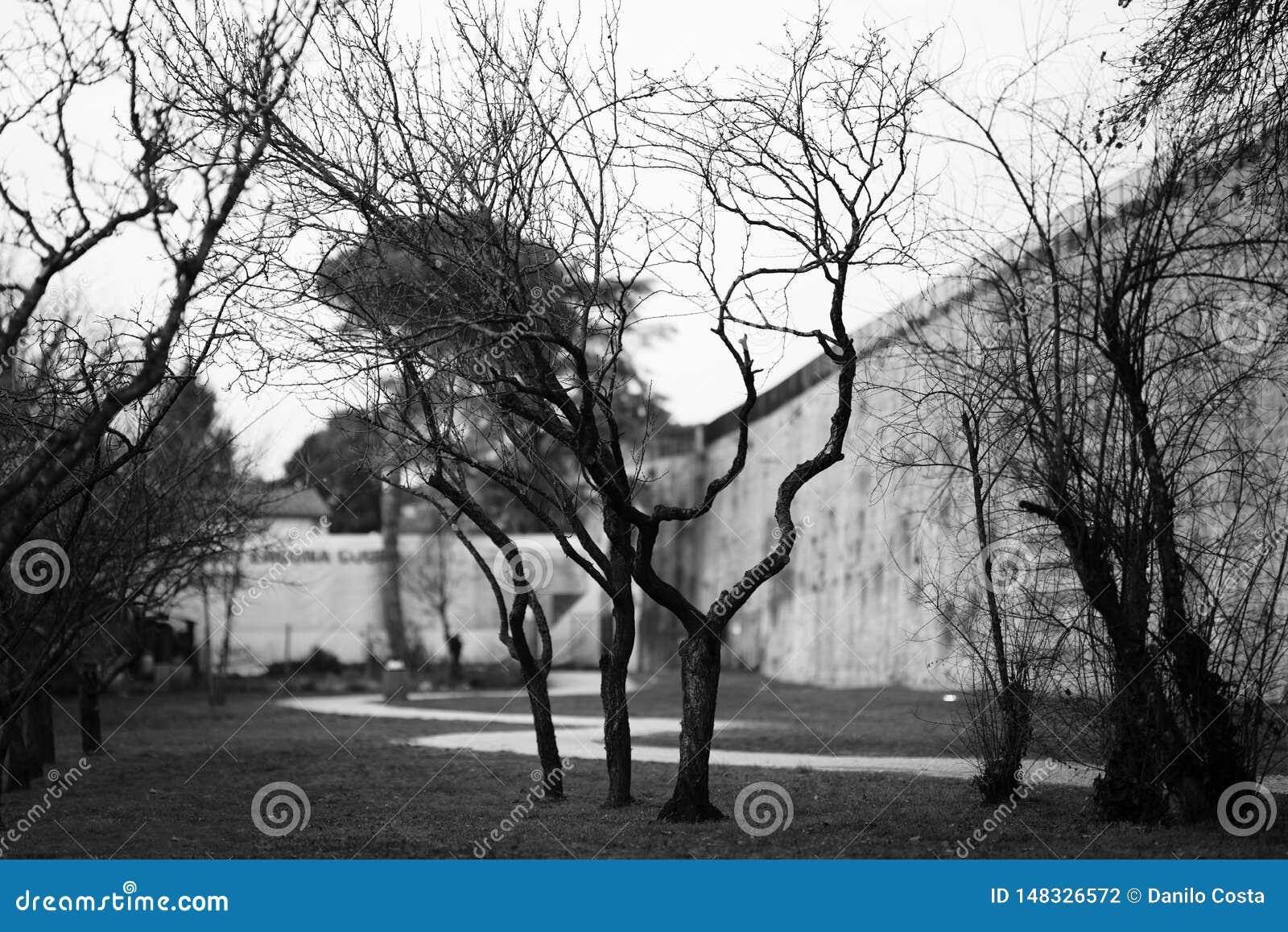 Paisagem preto e branco do inverno com árvores desencapadas