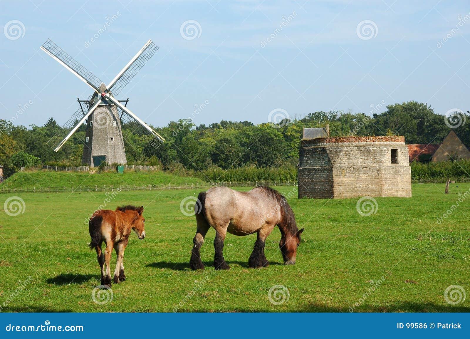 Paisagem rural com moinho de vento e cavalos.