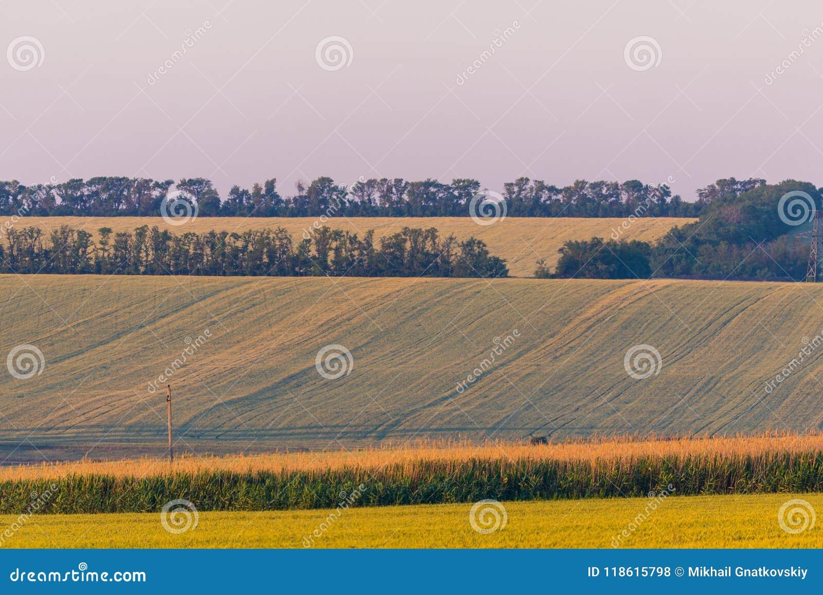 Paisagem rural do verão do por do sol do campo