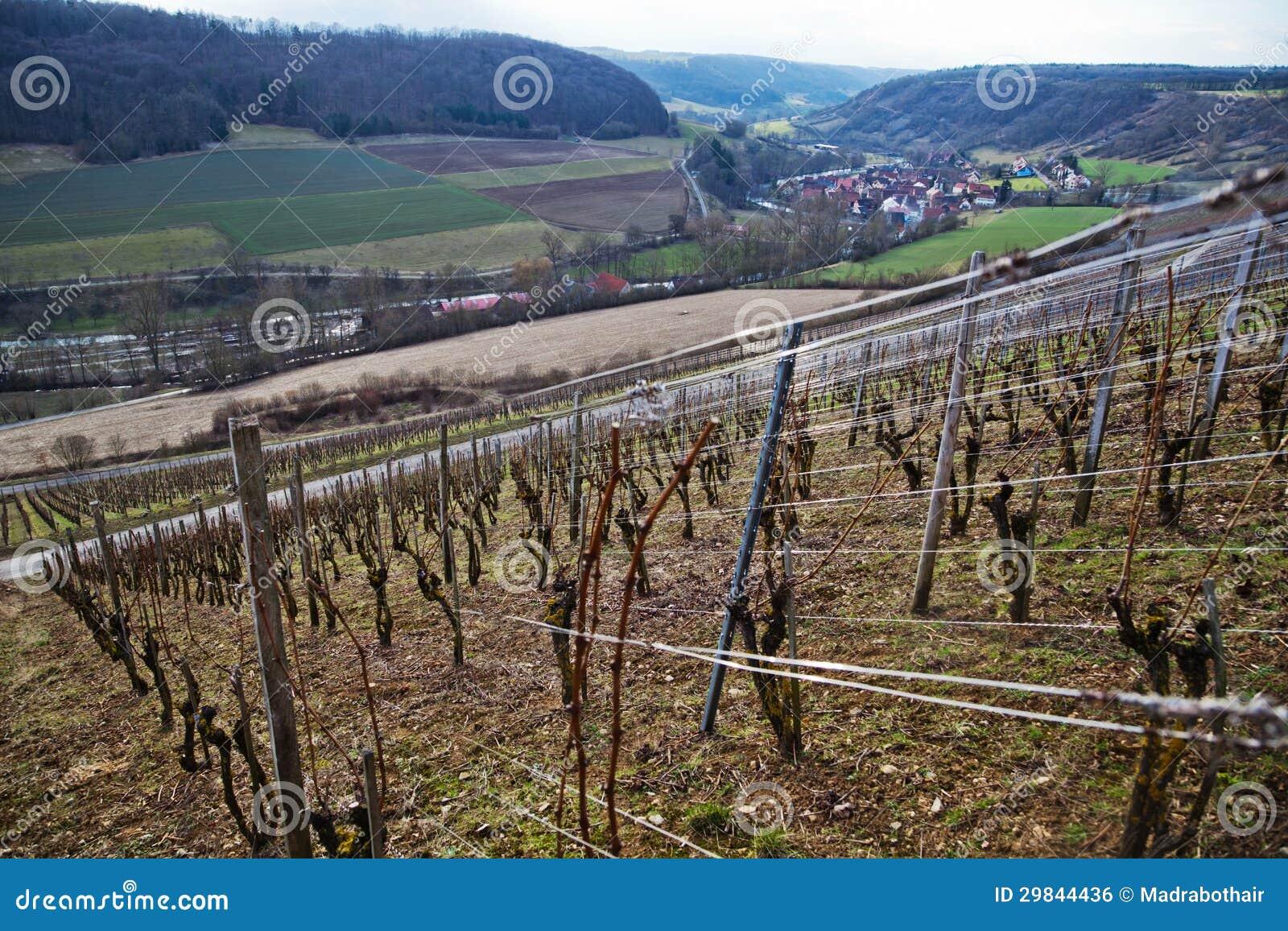 Paisagem rural com vinhedo