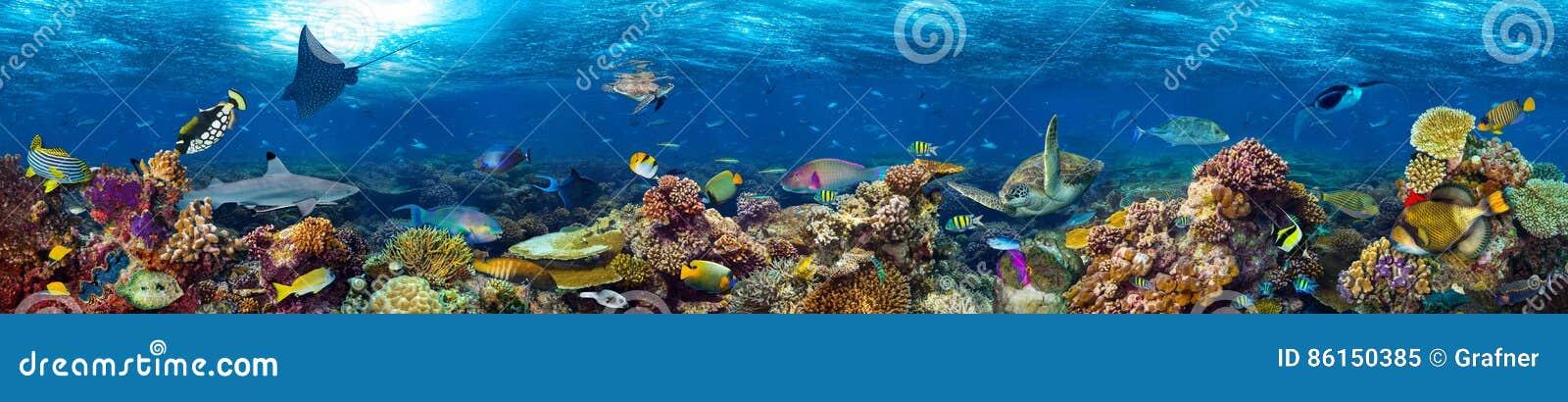 Paisagem subaquática do recife de corais