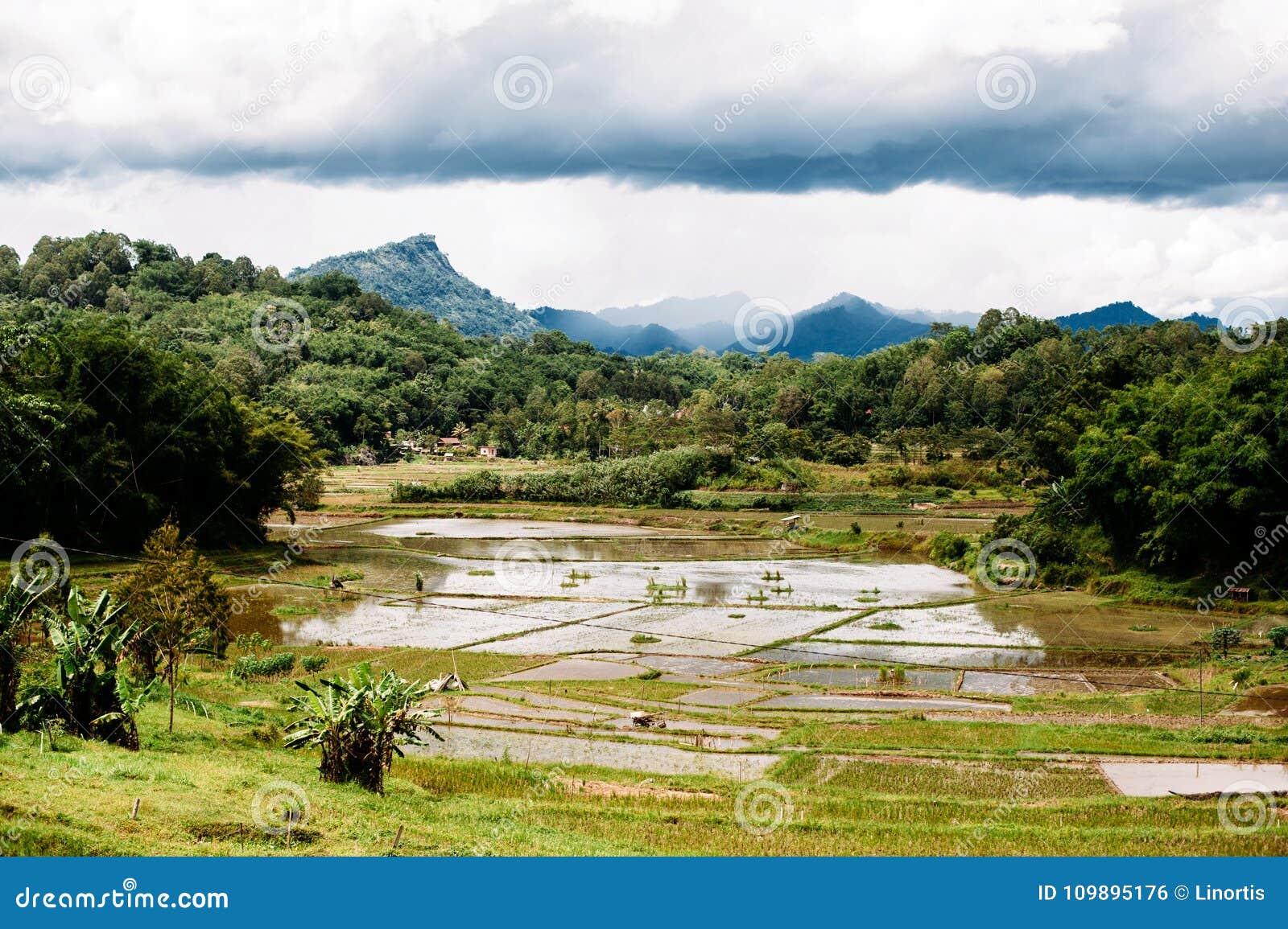 Paisagem surpreendente de Sualwesi sul, Rantepao, Tana Toraja, Indonésia O arroz coloca com água, montanhas, céu nebuloso