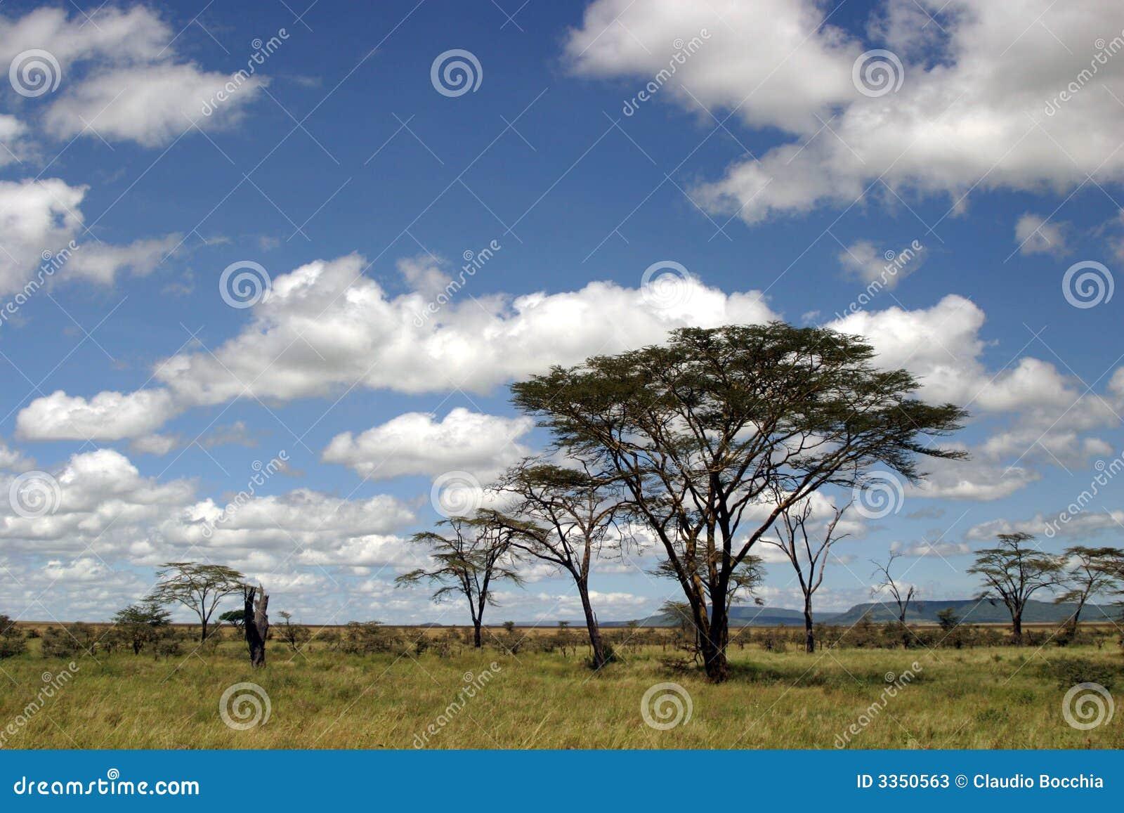 Paisagem tanzaniana