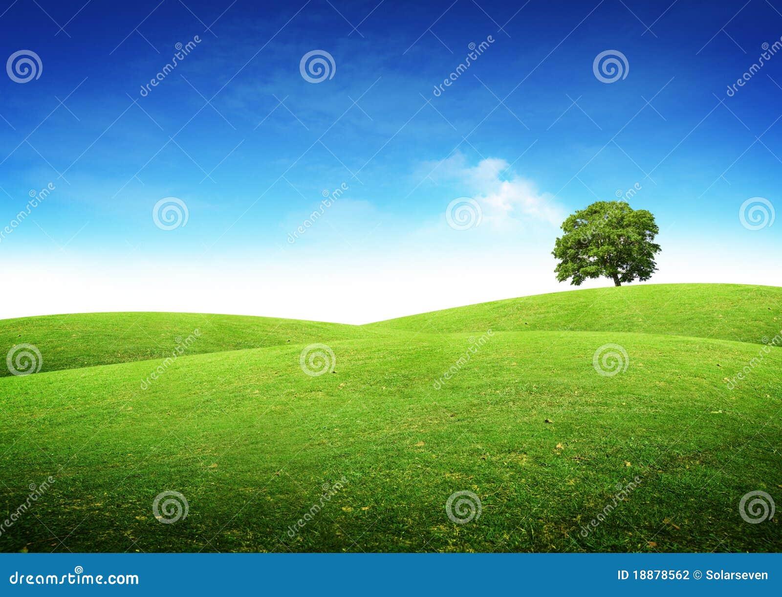Paisagem verde do verão