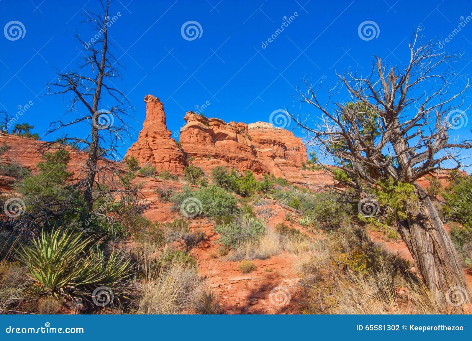 Paisagem vermelha do deserto da rocha