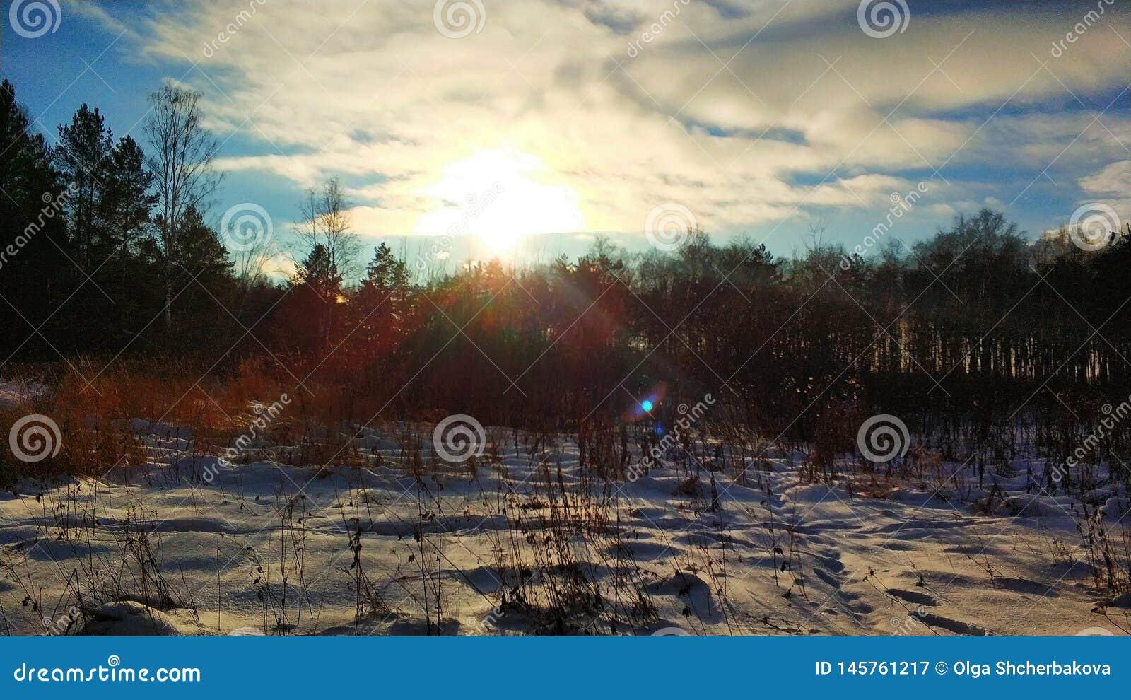 Paisagens do inverno na floresta de Ural em um dia ensolarado