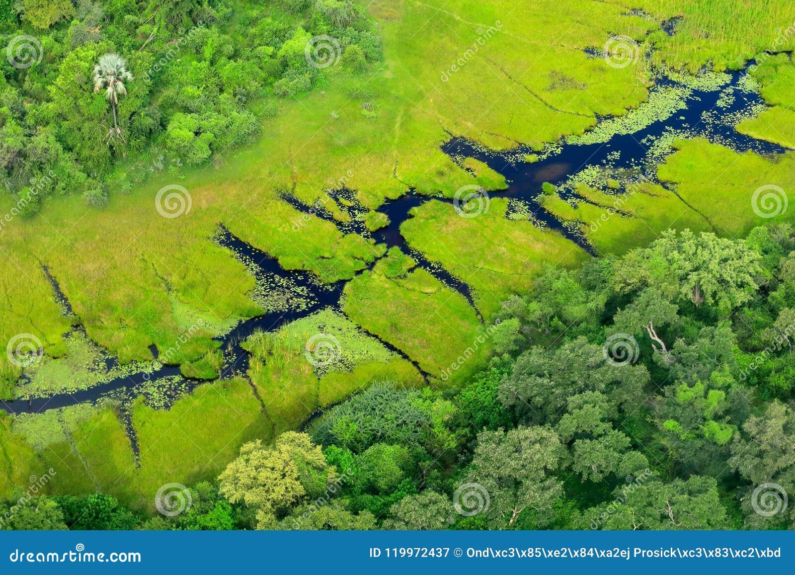 Paisaje aéreo en el delta de Okavango, Botswana Lagos y ríos, visión desde el aeroplano Vegetación verde en Suráfrica Árboles con
