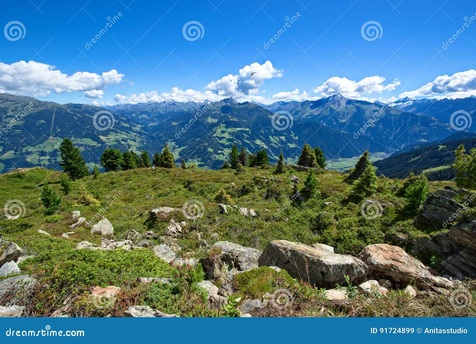 Paisaje asombroso de la montaña del verano con el prado y las piedras verdes en el primero plano Austria, el Tirol, Zillertal, Zi