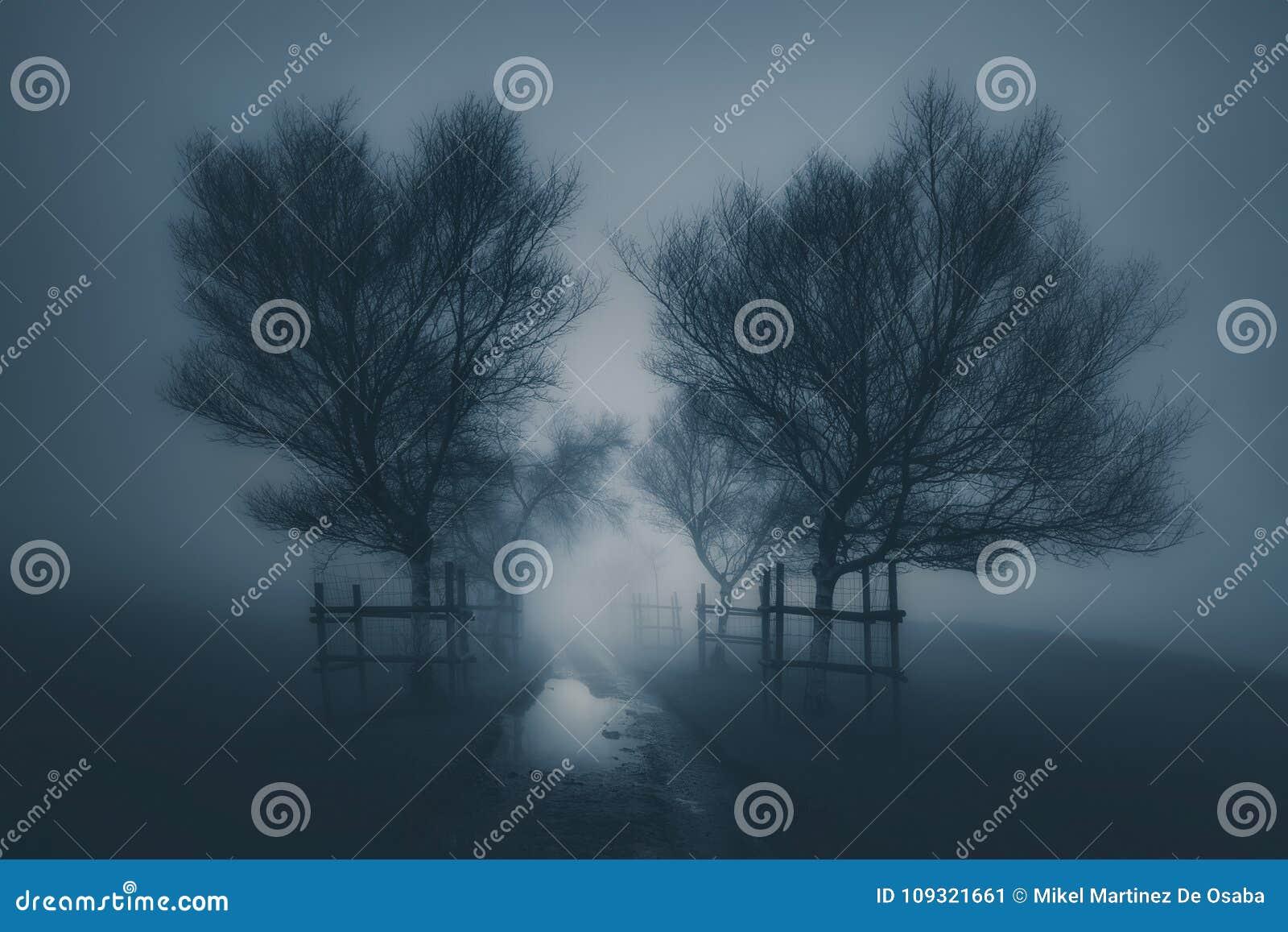 Paisaje asustadizo oscuro con la trayectoria que rodea por los árboles y la niebla